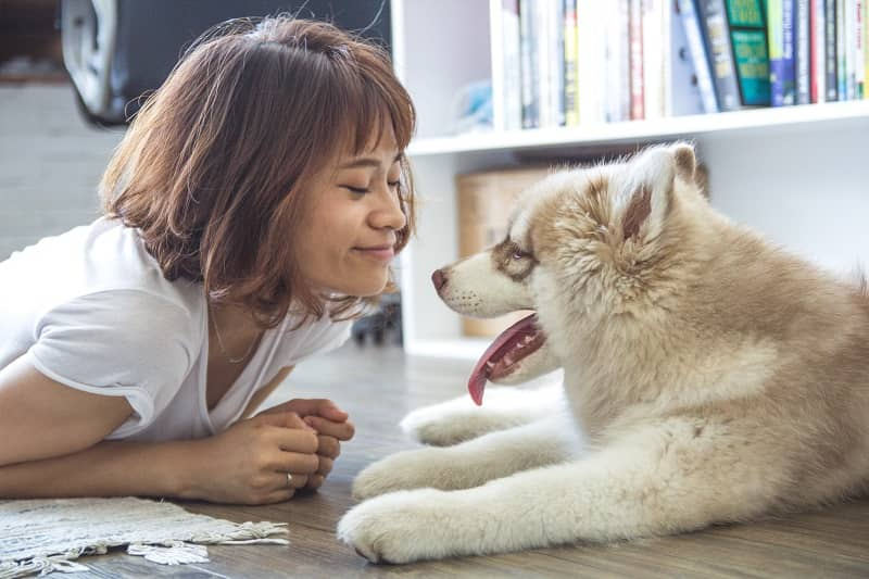 Having dogs at work: does it help or hinder employee mood?